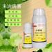 黃瓜根腐病怎么治怎么預防黃瓜根腐病專用藥青枯立克廠家