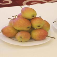 早酥红梨树苗苗圃基地、早酥红梨树苗报价多少图片