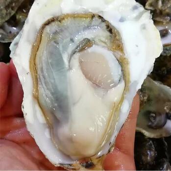 遵义牡蛎批发多少钱一个-海鲜生蚝批发市场