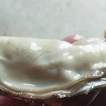 广元生蚝批发多少钱一个-价格一个生蚝怎么卖