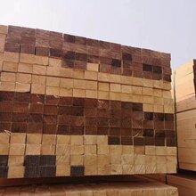 滨海松木原木规格尺寸图片