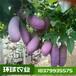 八月瓜苗價格八月炸苗找環球農業提供種植技術指導