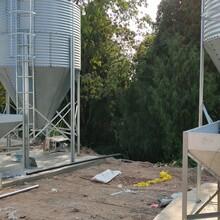 豬舍料線設備養殖塞盤鏈條全自動供料系統養豬料線歡迎訂購圖片