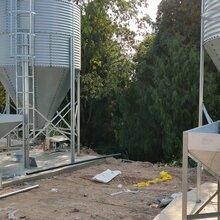 猪舍料线设备养殖塞盘链条全自动供料系统养猪料线欢迎订购图片