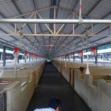 现货供应猪舍全自动料线塞盘料线加药器自动喂料设备养猪料线专业安装设计厂家图片