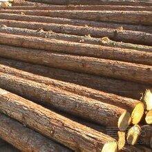 丝绸之路!中东木材进口报关清关青岛巨晖知名报关行