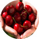 3公分太和櫻桃苗無棣黃金櫻桃苗銷售渠道