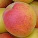 五年紅豐杏樹苗紅豐杏樹苗出售價格