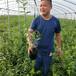 扦插美登藍莓苗武川米德藍莓苗出售基地