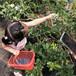 出售芝妮藍莓苗淄川區北村藍莓苗價格優惠