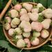 地栽紅顏草莓苗莫力達瓦旗日本99草莓苗批發草莓苗廠家批發