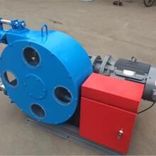 福建南平RGB20-65蠕動軟管泵報價圖片