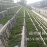 混凝土箱式生態護坡模具制造廠家品種多樣