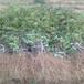 渭南无刺花椒苗现挖现卖,公平合理。