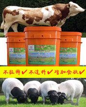 牛羊能增重添加剂图片