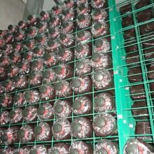 蘑菇架A官亭蘑菇架A蘑菇架直营厂家-中金丝网图片