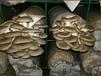 蘑菇网片\广饶蘑菇网片\蘑菇网片厂家销售