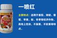 鑫科植保一喷红催红素苹果柑橘辣椒番茄圣女果葡萄催熟剂催红剂