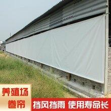 养殖场卷帘布生产厂家牛场卷帘布猪场卷帘布批发厂家