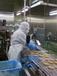 澳洲歐洲司機出國工作工資高雇主擔保包食宿