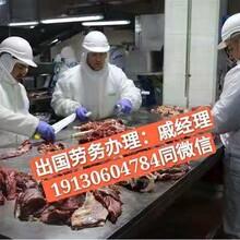 出国打工/澳大利亚牛肉厂招屠宰∞工剔骨工/月薪3万图片