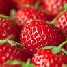 团建不用愁:好嗨呦~新安江草莓采摘,超嗨团建二日游