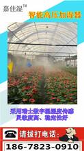 花卉溫室加濕裝置,嘉佳濕噴霧加濕圖片