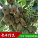 猕猴桃苗红心猕猴桃种苗基地直发