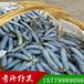 蓝焦果猫屎瓜种苗奇珍野果农业开发有限公司直销