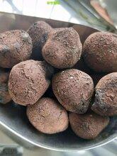 无锡陶粒,建筑陶粒,回填陶粒价格是▲多少钱一吨』图片
