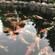 锦鲤出售 鱼池过滤