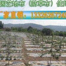 防草布-塑料编织袋-园艺地布除草布