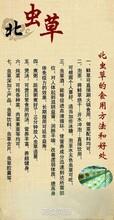 沂蒙山区供应特产北虫草图片