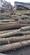 常德杨木原木木材片林