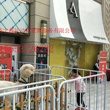 松鼠展览租赁、斗鸡展览租赁、香猪展览租赁
