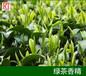 綠茶香精、青茶香精