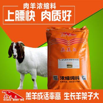 肉羊快速育肥