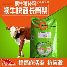 犊牛专用开口料颗粒料&北京英美尔专业牛饲料厂家&如何养好犊牛