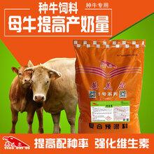 母牛如何提高产奶量?母牛喂什么饲料好?