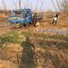 优质艳红桃树苗出售艳红桃树苗销售基地