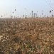 矮化5公分樱桃树苗5公分樱桃树苗批发基地