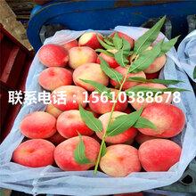 晚桃树苗一亩地产多少斤、晚桃树苗多少钱一棵图片