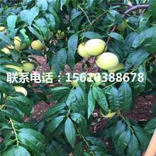 桃树小苗批发多少钱、桃树小苗产量多少图片