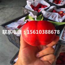 晚熟桃树苗简介、晚熟桃树苗多少钱一株图片