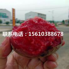 夏甜桃树苗一亩地产多少斤、夏甜桃树苗哪里价格便宜图片