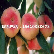 原生桃树苗那种好、原生桃树苗什么品种好