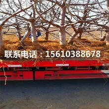 出售桑德拉玫瑰樱桃苗、桑德拉玫瑰樱桃苗批发什么价格图片