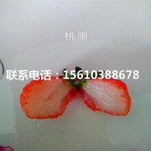 新品种桃熏草莓苗新品种