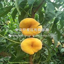 2019年映霜紅桃樹苗報價、映霜紅桃樹苗多少錢一棵圖片