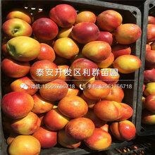 7公分黄桃树苗批发价格多少